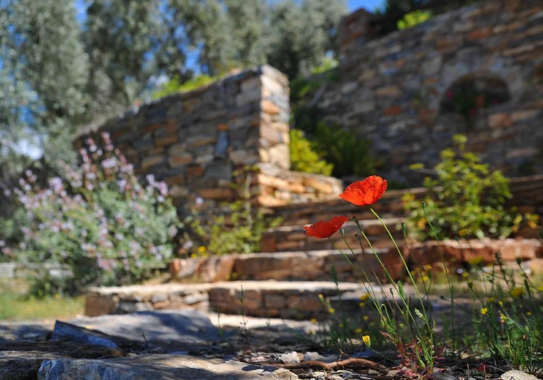 red flower in a backyard landscape